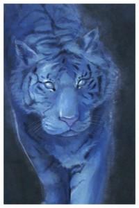 Tiger, drawing by Kayla Woodside