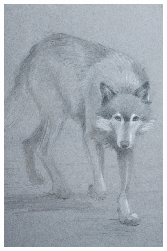 Wolf sketch by Kayla Woodside
